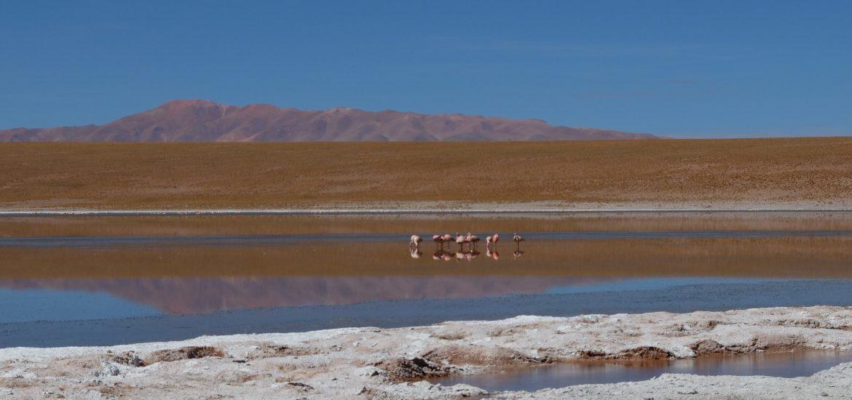 Sud bolivien lagune